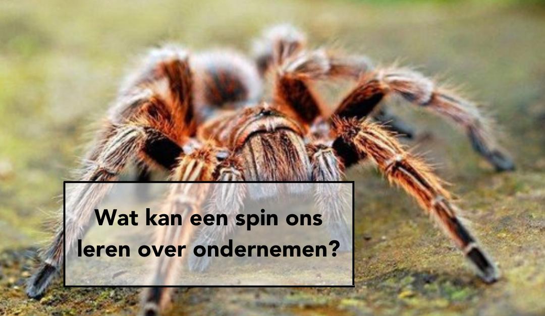 Wat kan een spin ons leren over ondernemen?