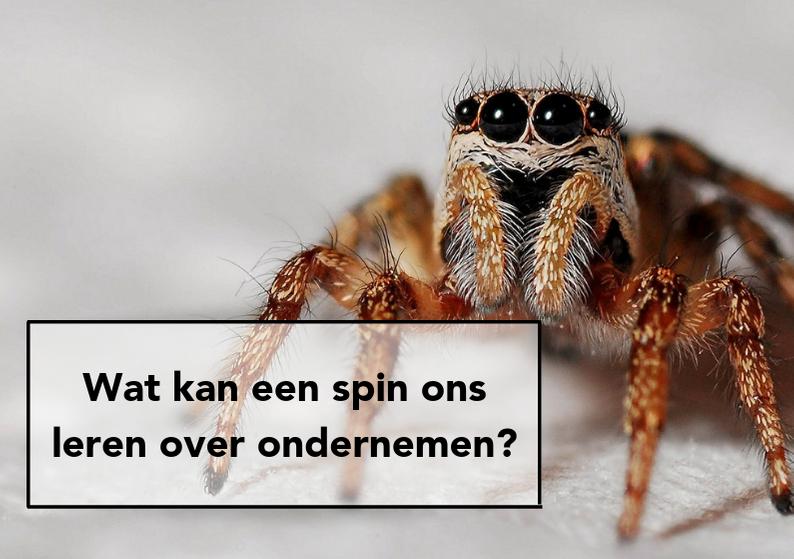 OMG! Wat kunnen we leren van een spin?